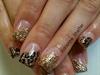 Goldend cheetah