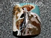 Texas Longhorn Heffer