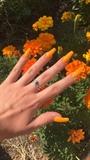 Orange Bbs!