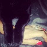 Kitty Lovin' Nail Art