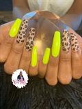 Neon & Leopard
