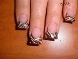 brown zebra