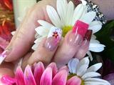 Tonyas springtime flowers