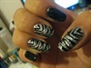 first zebra