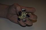 Hand painted nail art