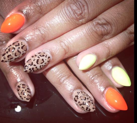 Leopard Highlights