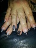 black and silver zebra