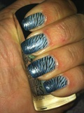 Double blue zebra
