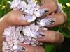 lilas flower