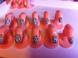 Multi Coloured Leopard Print
