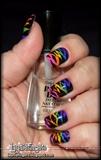 Rainbow Zebra 1
