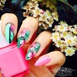 Gradient Hibiscus