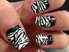 Half Zebra