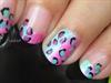 Cotton Candy Leopard
