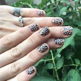 Illegal Leopard 🐾