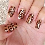 Cheetah!