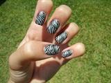 Zebra konacure