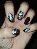 Silver Sparkle Zebra