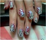 leopard n zebra