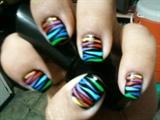 Rainbow Zebra / Black Base