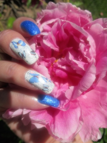 Peonies & Butterflies