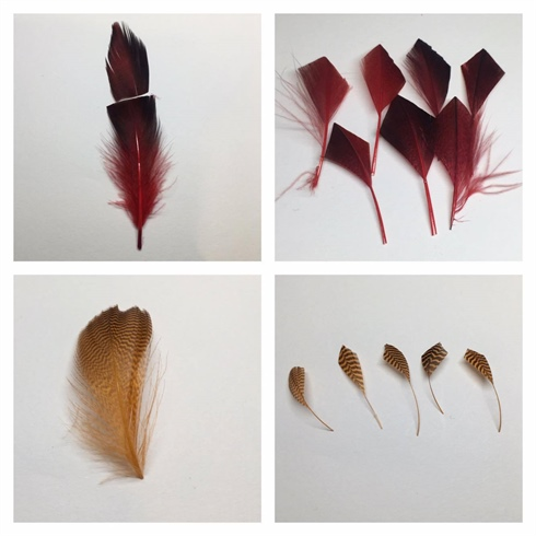 carefully selected the plumage feather that are full and intact, and cut them  into half. \n\nKeeping the bottom half of the feather, I cut the tip of it diagonally into a point, as shown in the picture . \n I then carefully strip away the excess feather to achieve the desirable shape .   I repeated the same process to create more feathers which I will be using to add to my design at a later stage . \n