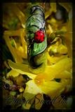 Ladybug 3d (Video tutorial below picture)