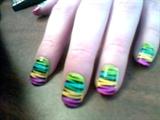 zebra rainbow