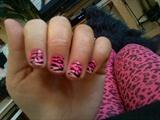 pink fade tiger