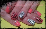 zebra pink