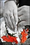 wedding french