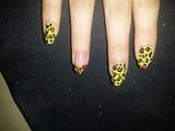 gepard nails
