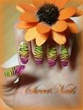 wild multicolour