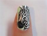 Mint Zebra Print - Zebra