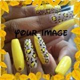 Yellow squareletto