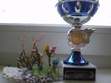 National tip box  championship