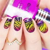 'Funky Spotted Zebra'