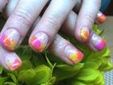 Tropical Color Splendor